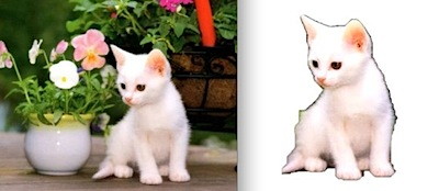 cat-fotoflexer-before-after-scissors