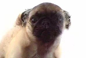 clean screen lcd dog