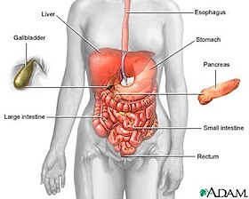 esophagus-stomach
