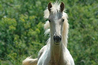 cavalo retrato