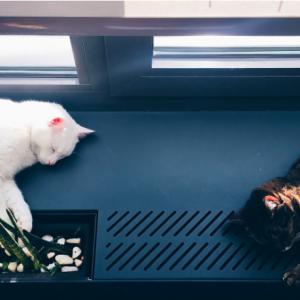 Caixa de Areia Autolimpante Inteligente Para Gatos